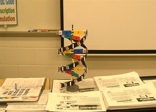 DNA Model in the classroom