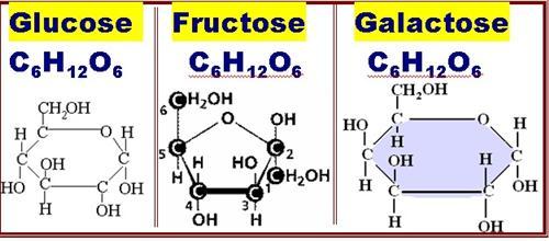 Curran Thomas Biochemistry Quiz Study Guide Carbon