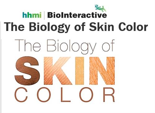 Hhmi Natural Selection Evolution Human Skin Color