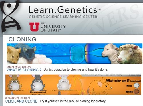 Cloning & Synthetic Biology | NEB