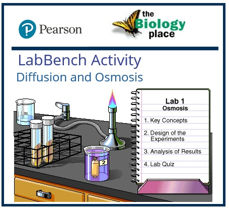 diffusion and osmosis lab report