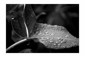 Arrowhead Droplets
